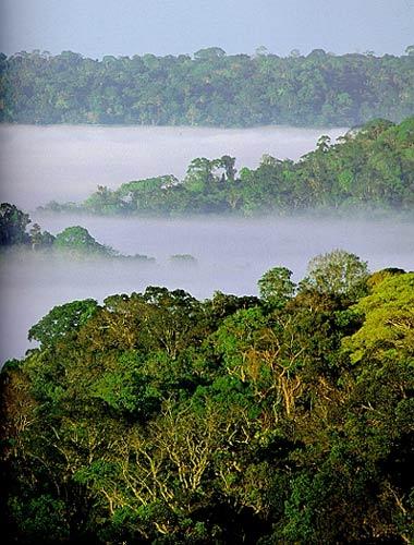 Kроны деревьев влажного тропического